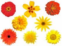 kwiaty odizolowane Zdjęcie Royalty Free