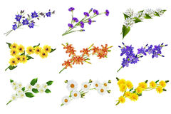 kwiaty odizolowane Obrazy Royalty Free