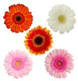 kwiaty odizolowywający Zdjęcie Royalty Free