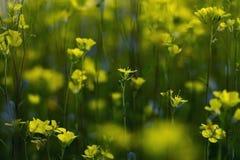 kwiaty ogrodu jednoczącego kolor Obrazy Stock
