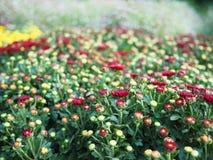kwiaty ogrodu jednoczącego kolor Obraz Royalty Free