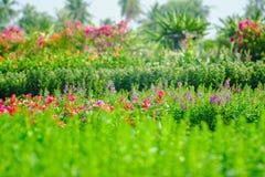 kwiaty ogrodu jednoczącego kolor Fotografia Stock