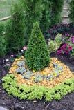 kwiaty ogrodu jednoczącego kolor Obraz Stock