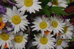 kwiaty ogrodu letni kwiat Zdjęcie Stock