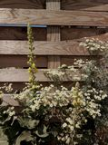 kwiaty ogrodu letni kwiat Zdjęcia Stock