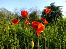 kwiaty ogrodu letni kwiat obraz stock