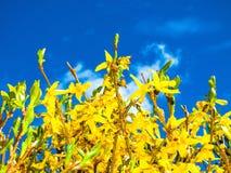 kwiaty ogrodu letni kwiat Fotografia Royalty Free
