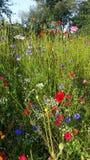kwiaty ogrodu letni kwiat Obrazy Stock