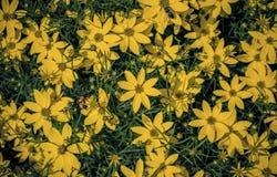 kwiaty ogrodu letni kwiat zdjęcie royalty free