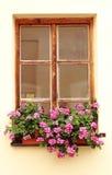 kwiaty okno obrazy royalty free