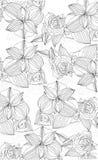 Kwiaty orchidee i róże Obraz Royalty Free