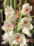 kwiaty orchidei Zdjęcia Royalty Free