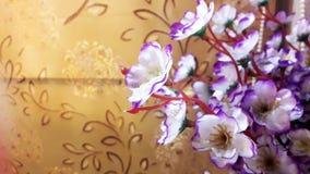 Kwiaty - ornamentacyjne rośliny, izbowy wnętrze piękno kwiaty Fotografia Stock