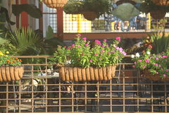 Kwiaty outside Zdjęcie Royalty Free