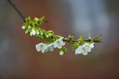 kwiaty owoców Zdjęcia Stock