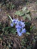 Kwiaty północ Obraz Royalty Free