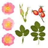 Kwiaty, p?czki i li?cie dziki, wzrastali royalty ilustracja