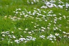 Kwiaty perfect dla tła Zdjęcie Stock