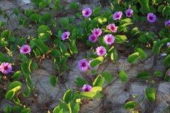Kwiaty, Phra Ae plaża, Ko Lanta, Tajlandia Obraz Royalty Free