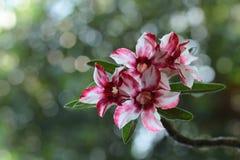 kwiaty, piękny kwiat obraz stock