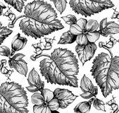 Kwiaty. Piękny tło z kwiatem. Fotografia Royalty Free