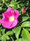 Kwiaty piękno Zdjęcia Royalty Free
