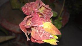 Kwiaty po deszczu Obraz Royalty Free