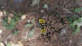 Kwiaty poboczem obrazy stock