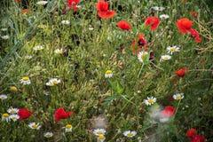 Kwiaty pole Zdjęcia Royalty Free