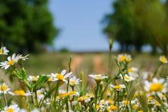 Kwiaty pole Zdjęcia Stock