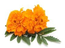 kwiaty pomarańczy 2 Obraz Stock