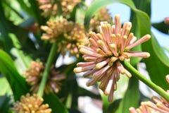 Kwiaty pomyślność Zdjęcie Stock