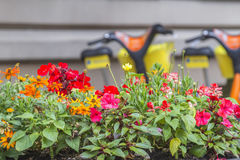 Kwiaty przeciw miastowemu burred tłu z bicyklami Fotografia Stock