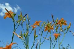 Kwiaty przeciw niebu Obrazy Royalty Free