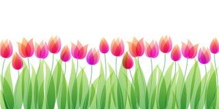 kwiaty przejrzystego Zdjęcie Royalty Free