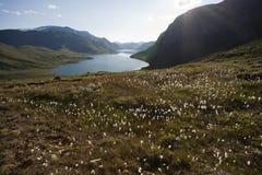Kwiaty przy Besseggen granią w Jotunheimen parku narodowym Zdjęcia Royalty Free