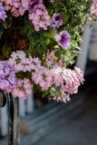Kwiaty przy flowerbed jako krajobrazowi projektów elementy Obrazy Royalty Free