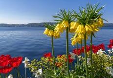 Kwiaty przy jeziorem Obraz Stock