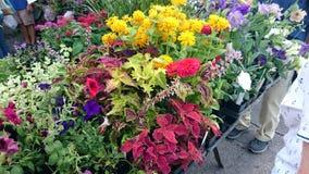Kwiaty przy miasto rynkiem Zdjęcie Stock