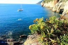 Kwiaty przy morzem obrazy royalty free