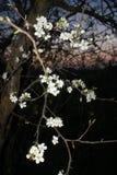 Kwiaty przy nocą Fotografia Stock