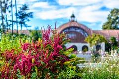 Kwiaty przy ogródem botanicznym Obraz Stock