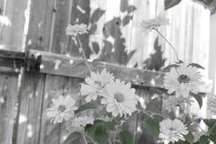 Kwiaty przy ogrodzeniem Obrazy Stock