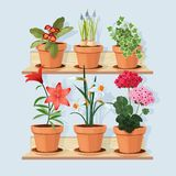 Kwiaty przy półkami Dekoracyjne drzewne rośliny r w garnkach i pozycji w domowym wnętrzu przy drewnianą półka wektoru kreskówką ilustracja wektor