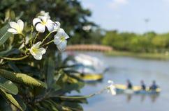 Kwiaty przy parkiem Fotografia Stock