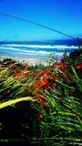 Kwiaty przy plażą Obraz Royalty Free
