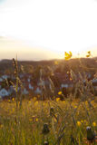 Kwiaty przy wschodem słońca Obrazy Stock
