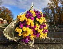 Kwiaty, purpurowi irysy i żółte chryzantemy, Fotografia Royalty Free