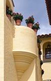kwiaty puszkujący Obraz Royalty Free