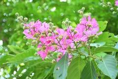 Kwiaty różowa leluja w jaskrawym - zieleń opuszcza Fotografia Royalty Free